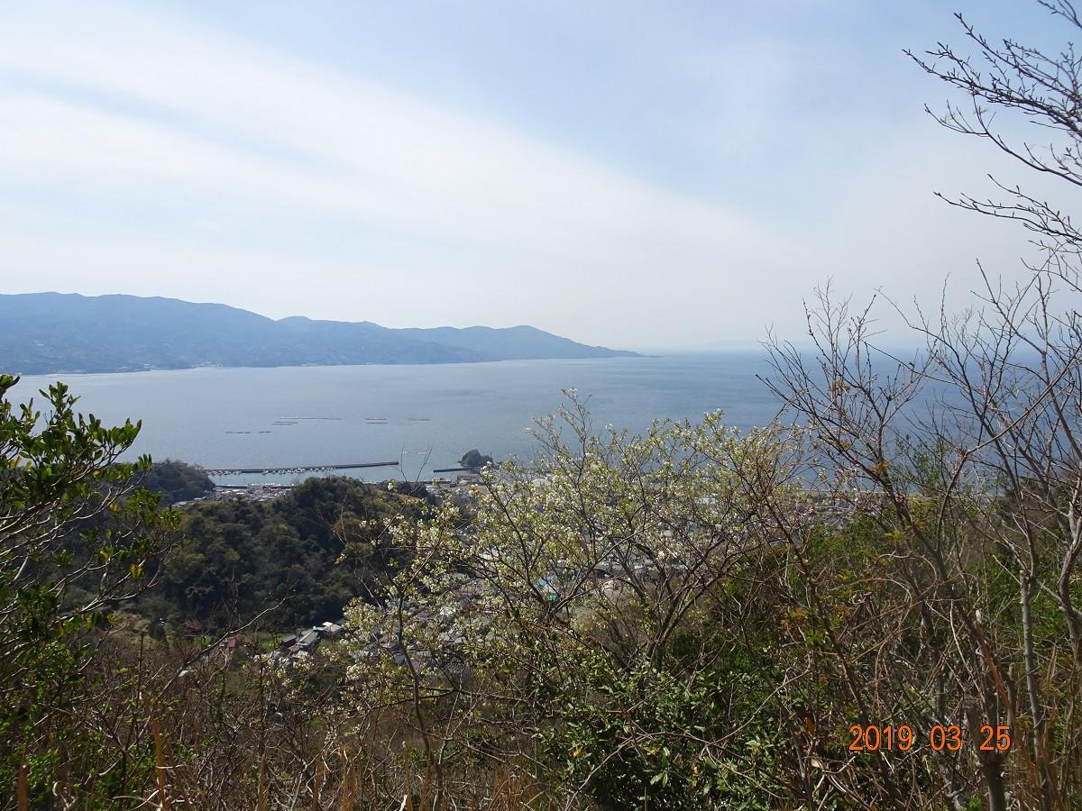 桜と駿河湾を望む