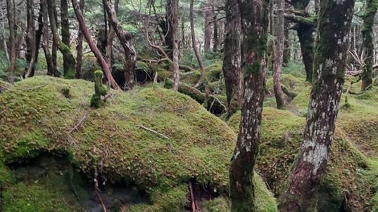 神秘的な「もののけの森」(白駒池)