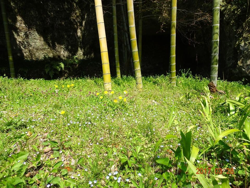 海蔵寺 春の花