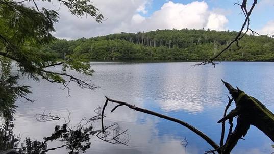 白駒池の水面に映る夏雲!イイね(≧∇≦)b