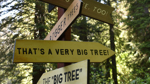 Redwood National & State Park - Where to go and What to do