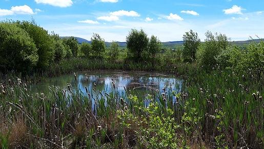 Restored site watercourse .jpg