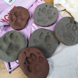 Our last kit paws of the year have arriv