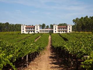 Unitat 4 - Cicle biològic de la vinya