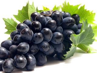 Unitat 2 - L'origen del vi: la vinya