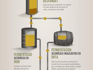 Elaboració del vi blanc - by Torres