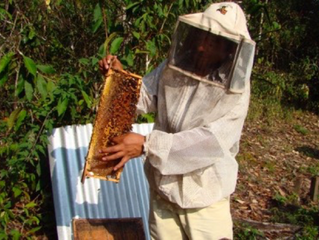 WCCN Supports Beekeeping Project in Mexico to Mitigate Adverse Impact of Climate Change
