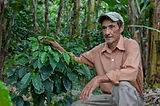 Daniel Castillo, Fair Trade Coffee Farme