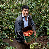Agustin Garay, Fair Trade Coffee Produce