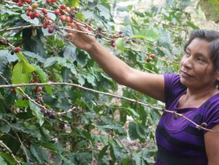Marina Mazariegos: A Borrower Profile