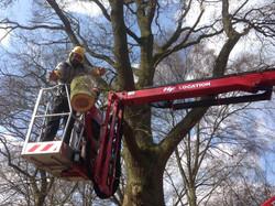 Elagage et abattage d'arbre