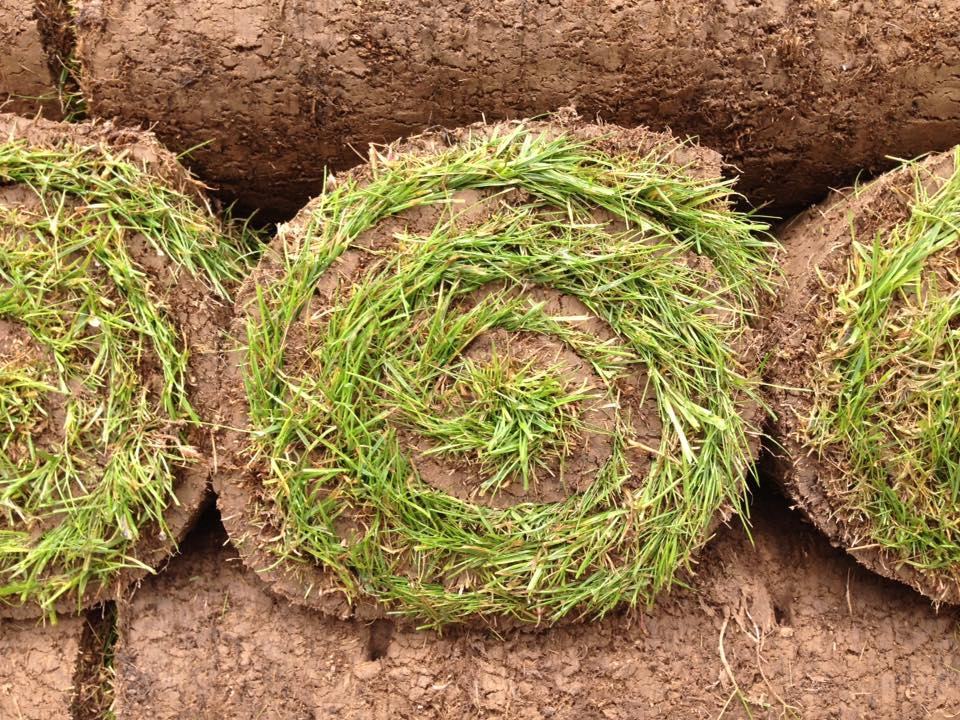 création de pelouse - gazon rouleau