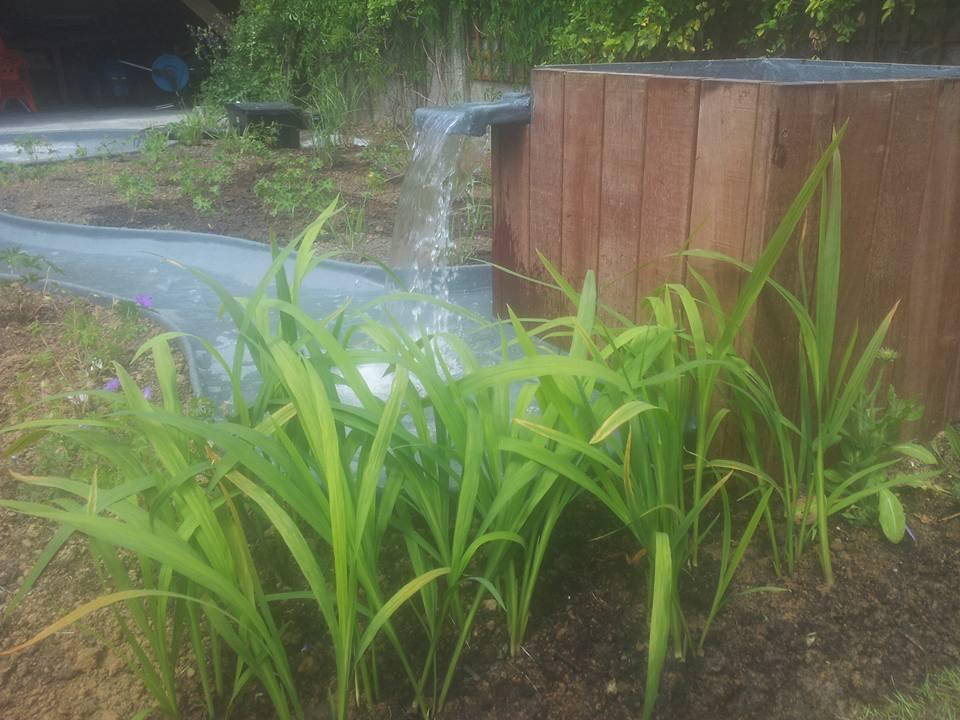 Aménagement d'étang et lagune