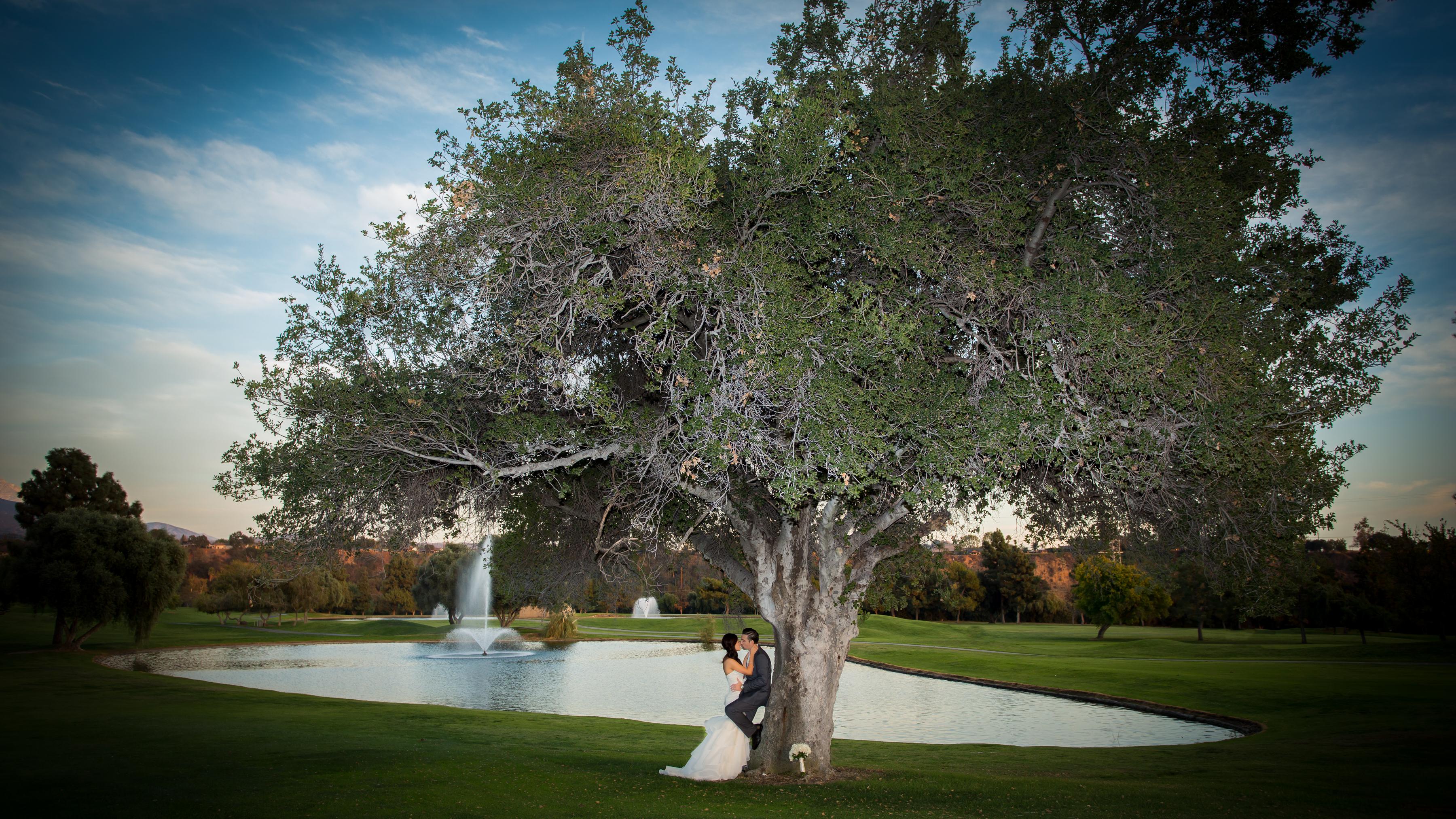Austin Wedding Big Tree