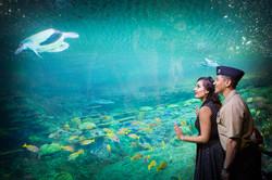 Engagement at Sea World