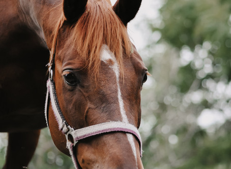 Do you and your horse work in Harmony?