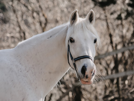 Your horse is never being difficult on purpose!