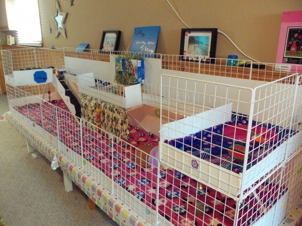 Guinea Pig Cage Ideas Mp Animal Care