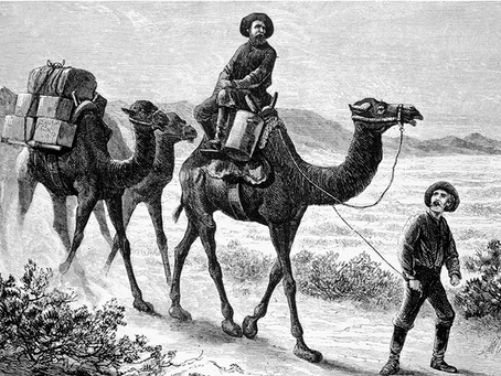 Camels for Arizona (Part 2) Written by Dorothy Daniels Anderson