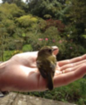 Bird in hand.jpg
