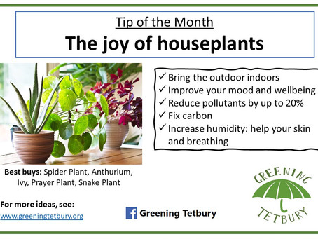 Tip of the Month: The Joy of Houseplants