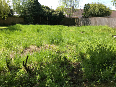 Is it a meadow or a patch of weeds?