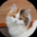 Katze- Olivia.png