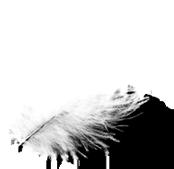 Confetti-Feder.png