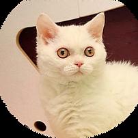 Katze-IcePrincess.png