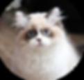Katze- Anastasja.png