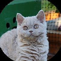 Katze-Arielle.png