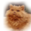 kater-Fluffy.png