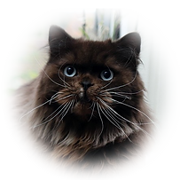 Kater Blacky.png