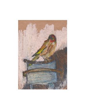 Goldfinch - Abbie Gladwin.jpg