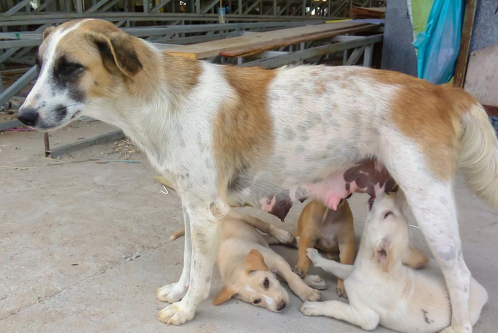 mother dog nursing.jpg