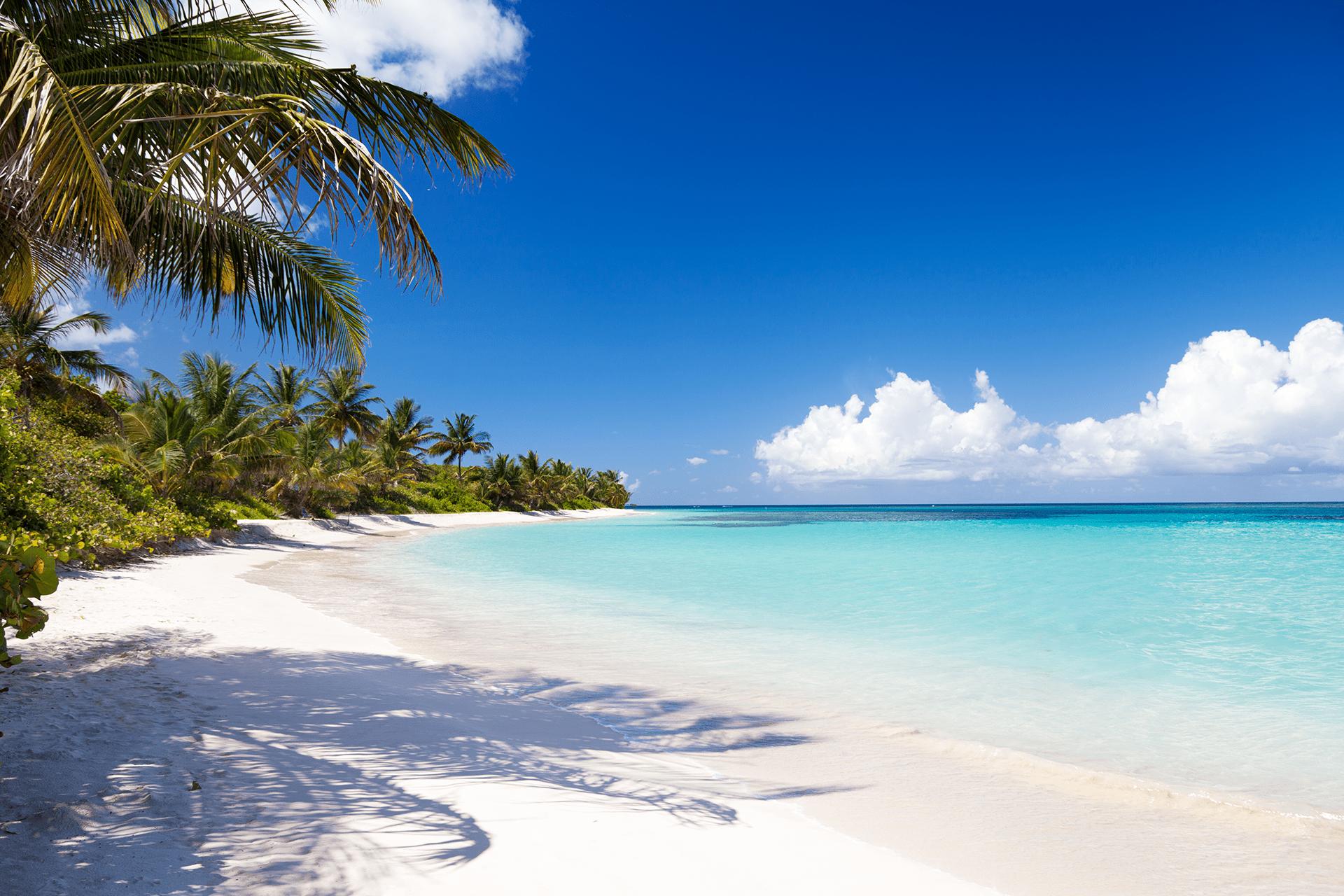 Caribbean Sailors