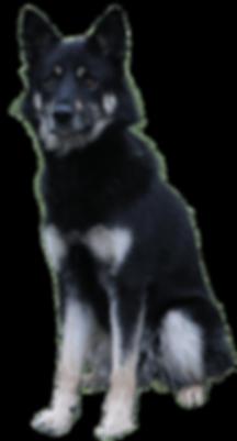 koira1 (1).png