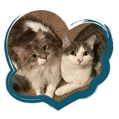 Two gray and white cats cuddle together in the shape of a heart.
