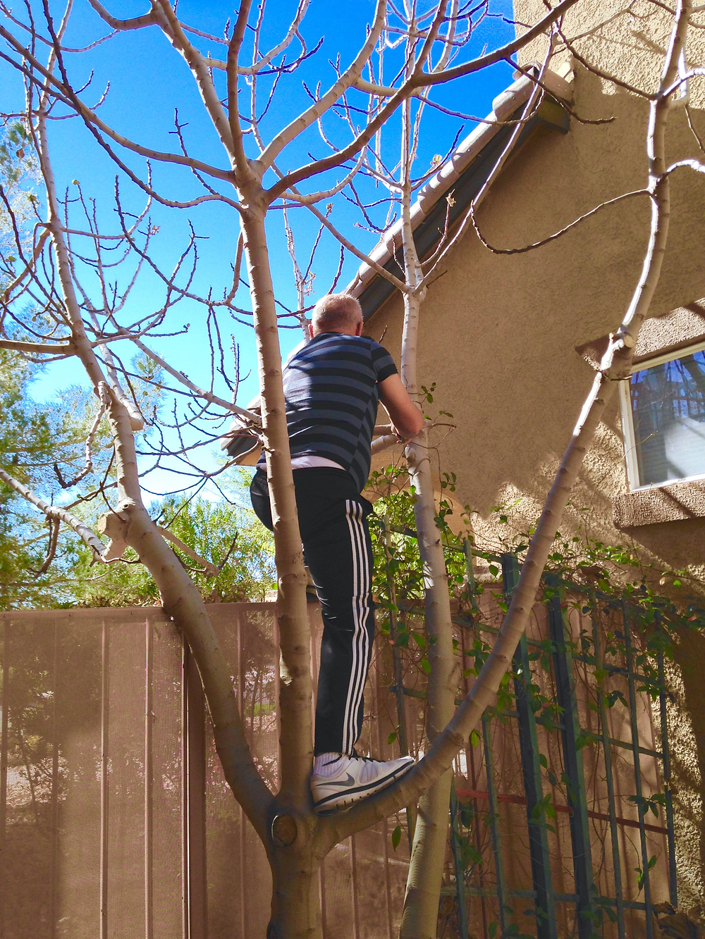 Our friend cutting down our fig tree