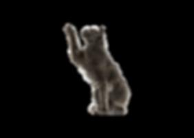 kittykat.png