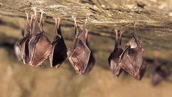 remoção de morcegos
