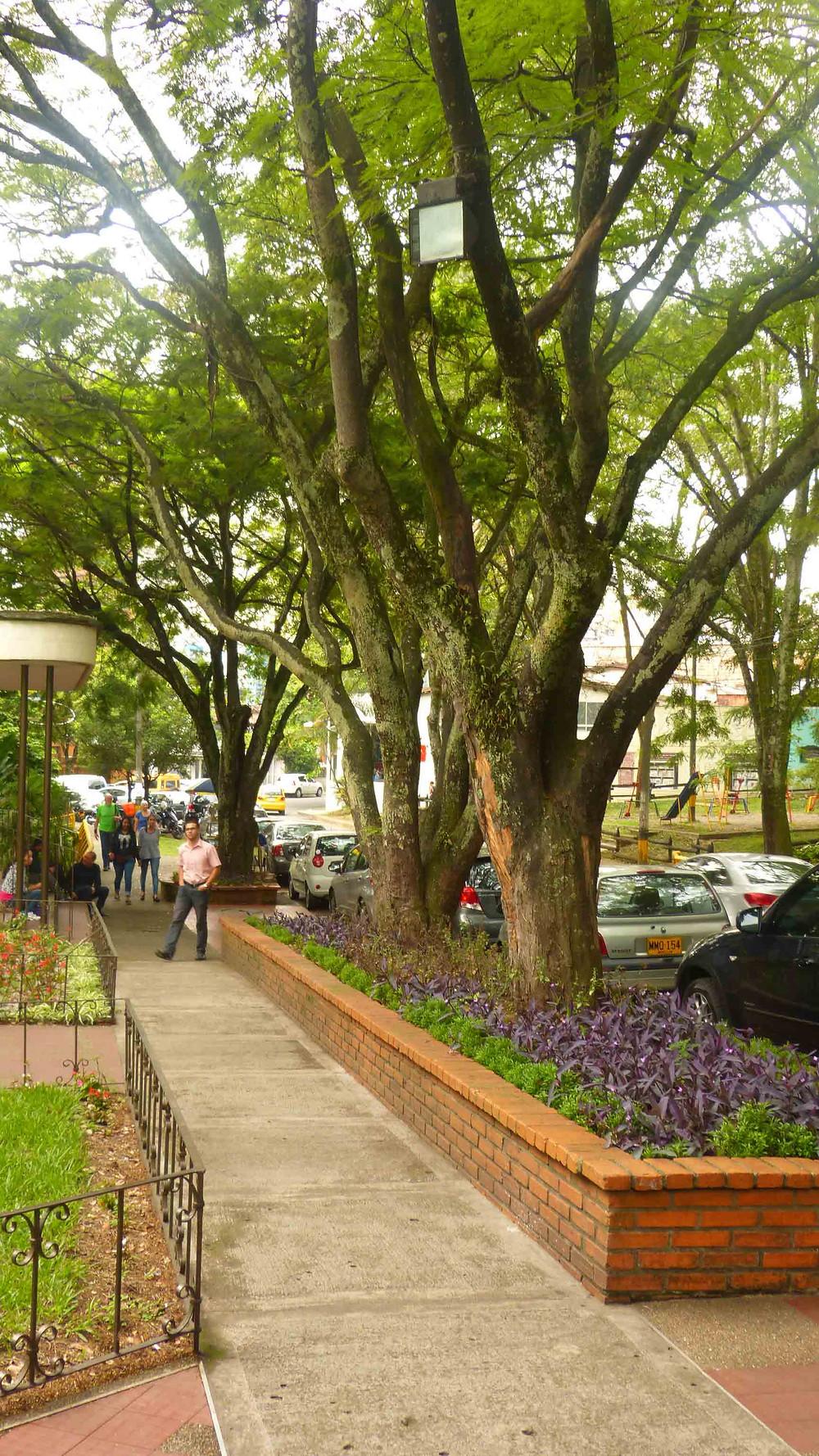 Calçada e arborização - Bairro Poblado
