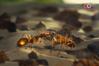 How Does Baiting Work On Ants And Termites?