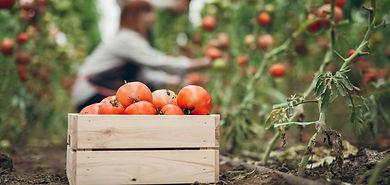 cueillir-ses-fruits-et-legumes-de-ses-pr