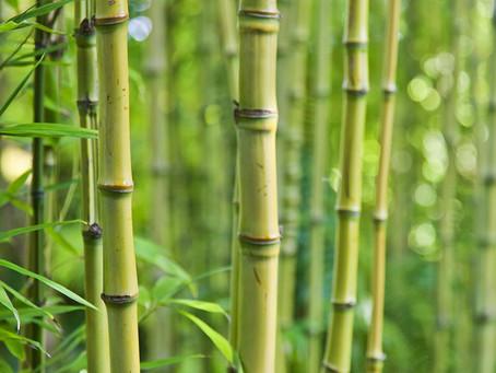 Pourquoi je ne vous propose pas d'éponge de bambou dans mes créations (lingettes, essuie-tout…)