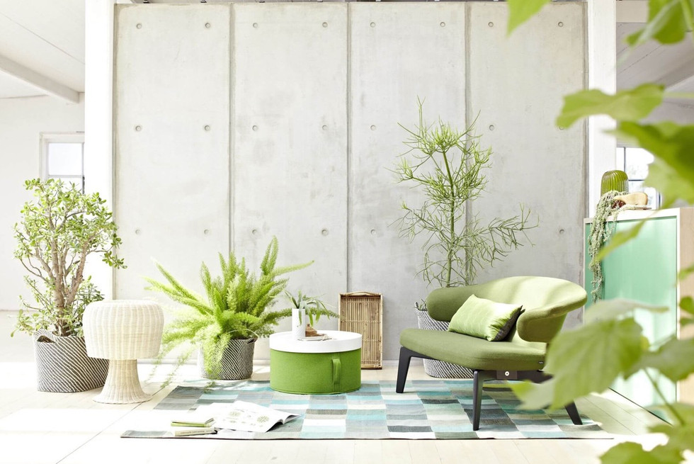 Indoor-House-Plants-with-Concrete.jpg