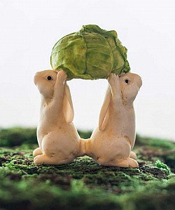 Rabbits Holding Up Cabbage