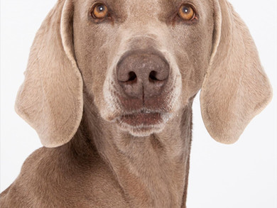 """I ritratti selezionati da voi per la mostra """"Espressioni da cani"""""""