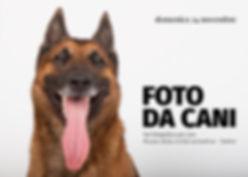 Foto da cani set fotografico per cani NO
