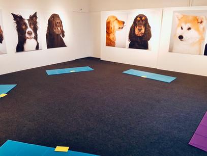 Anche i cani fanno yoga!